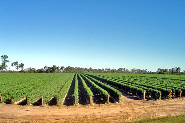 tomato.crops.aligned